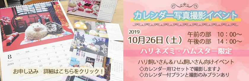 激カワ♪イベント ハリネズミ&ハムスター カレンダー撮影会